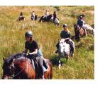 sejour linguistique vacances irlandaises cheval equestre