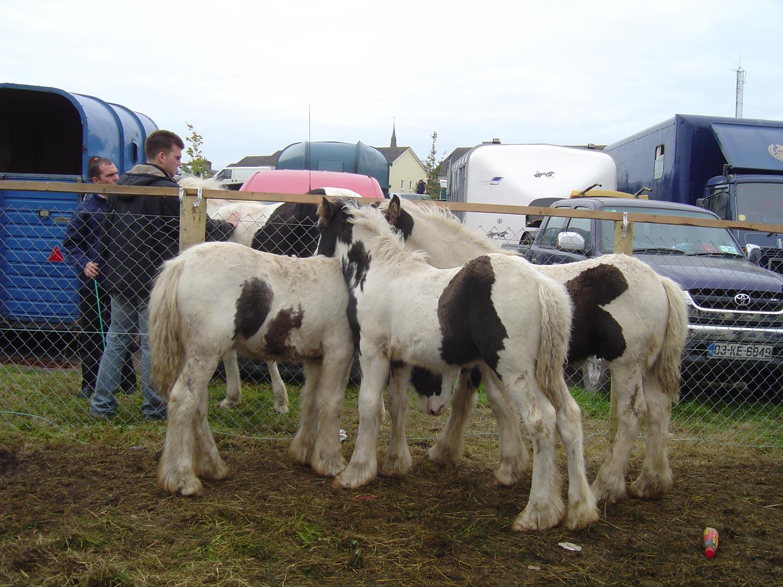 Ballinasloe-horse-fair-02
