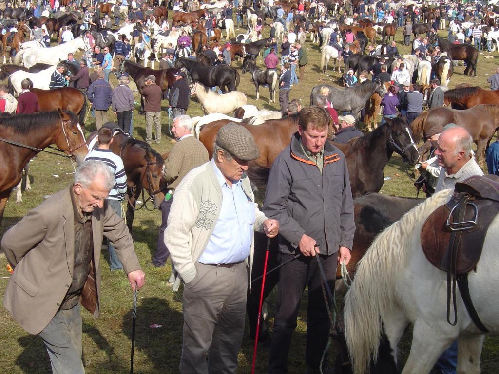 Ballinasloe-horse-fair-03