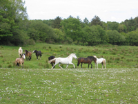 Irish Horseriding